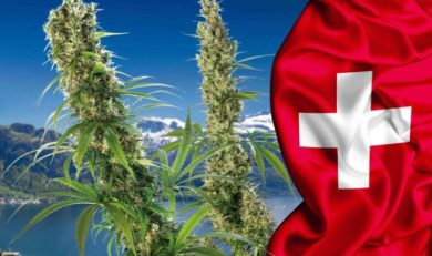 In Svizzera la cannabis light non ha monopolio